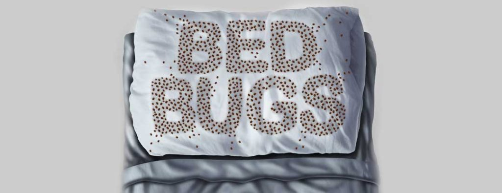 Bed Bug Control and Extermination in Salt Lake City